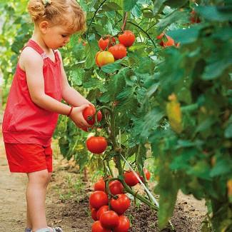 Рабочий на сбор фруктов и овощей (Испания)