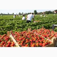 Вакансии для рабочих на сезонные работы в Польше