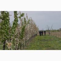 Догляд за деревами і кущами в Польщі