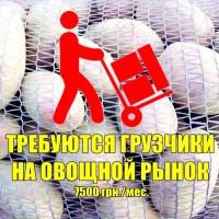 Требуются грузчики на оптовый рынок «1й километр»