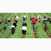 Работа и вакансии в Португалии для мужчин и женщин по национальной рабочей визе