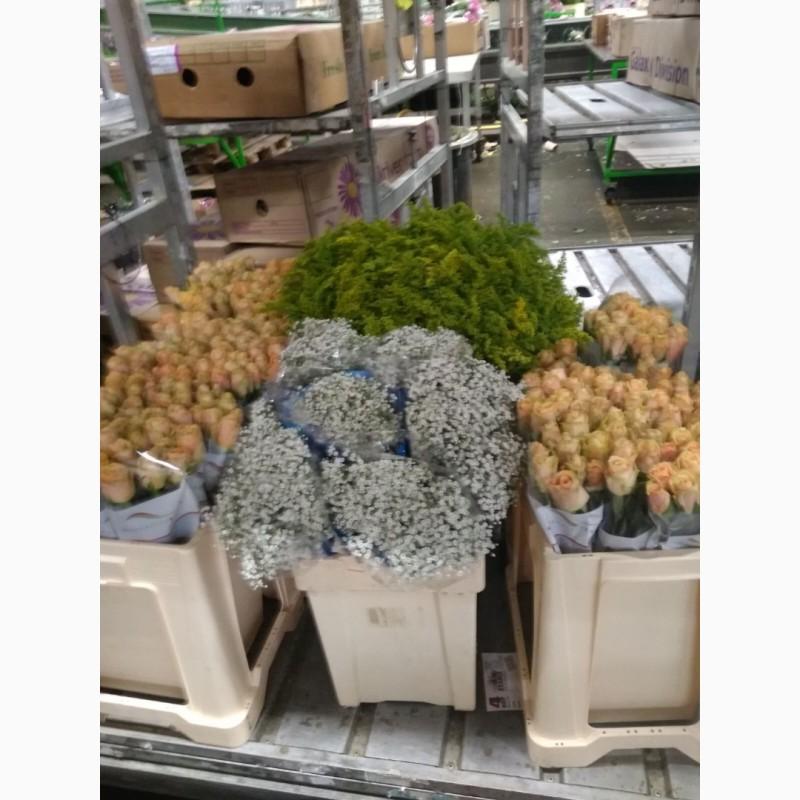 Фото 9. Работа и вакансии на сельскохозяйственных работах в Голландии