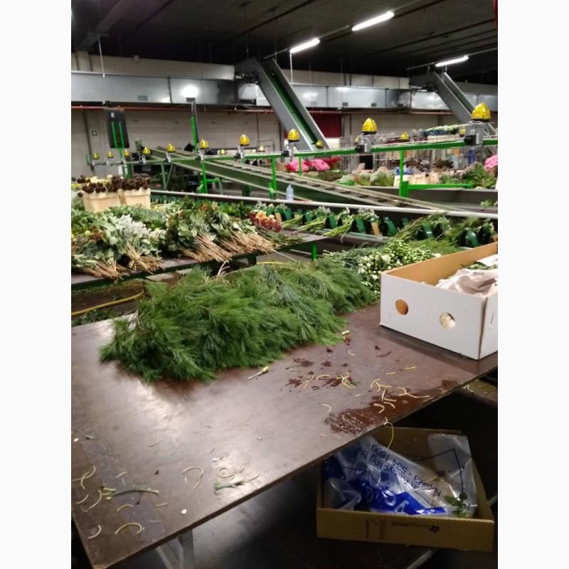 Фото 13. Работа и вакансии на сельскохозяйственных работах в Голландии