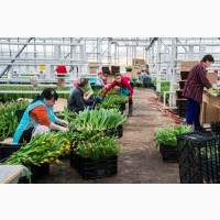 Работа и вакансии женщинам в Голландии