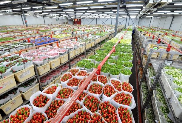 Фото 2. Работа и вакансии на сельскохозяйственных работах в Голландии